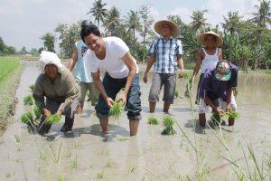 Drs Tengku Akhmad Tala'a alias Tengku Ameck menanam padi bersama petani di Desa Karang Anyer, Kecamatan Beringin, Kabupaten Deli Serdang.
