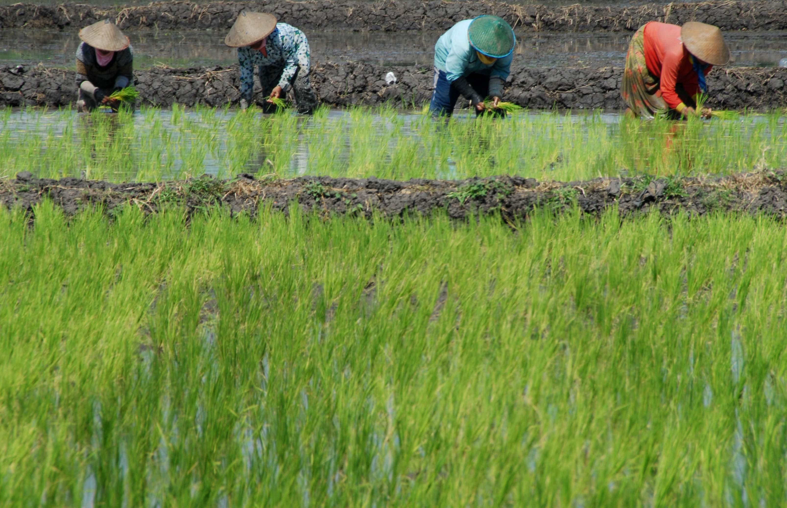 Sektor Pertanian Cukup Menjanjikan Jurnal Asia