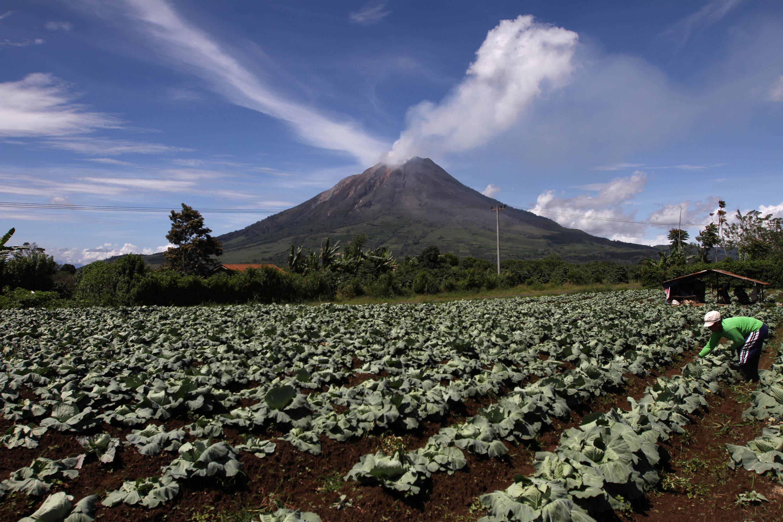 Mengetahui Dampak Abu Vulkanik pada Tanaman - Jurnal Asia