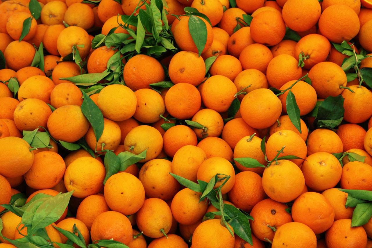 Orange Wallpaper Jeruk - WallpaperShit