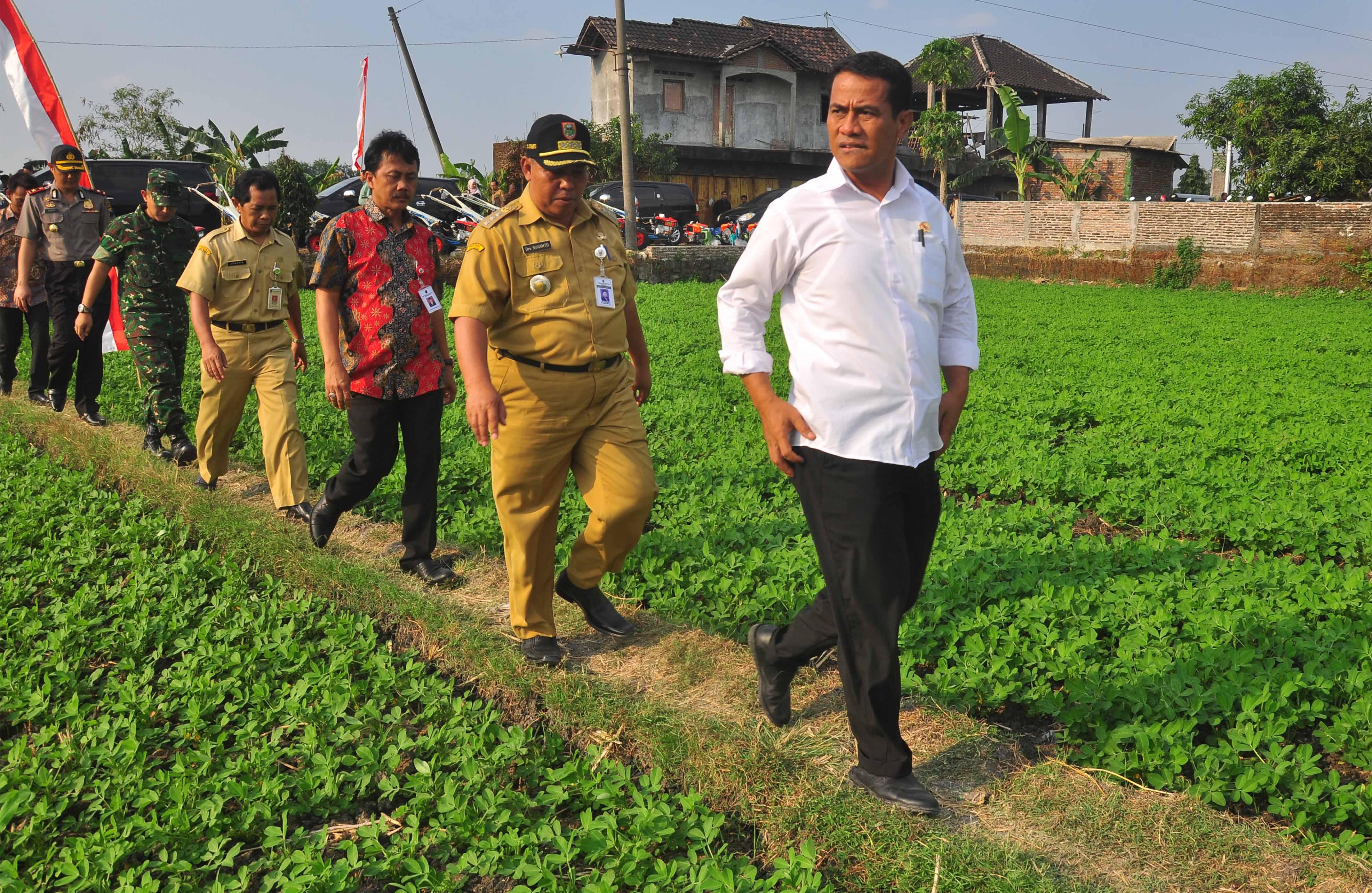 Menteri Pertanian Amran Sulaiman Kanan Mengunjungi Sawah
