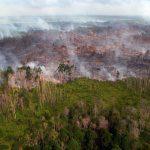 Kabut Asap Kebakaran Hutan Mulai Selimuti Riau