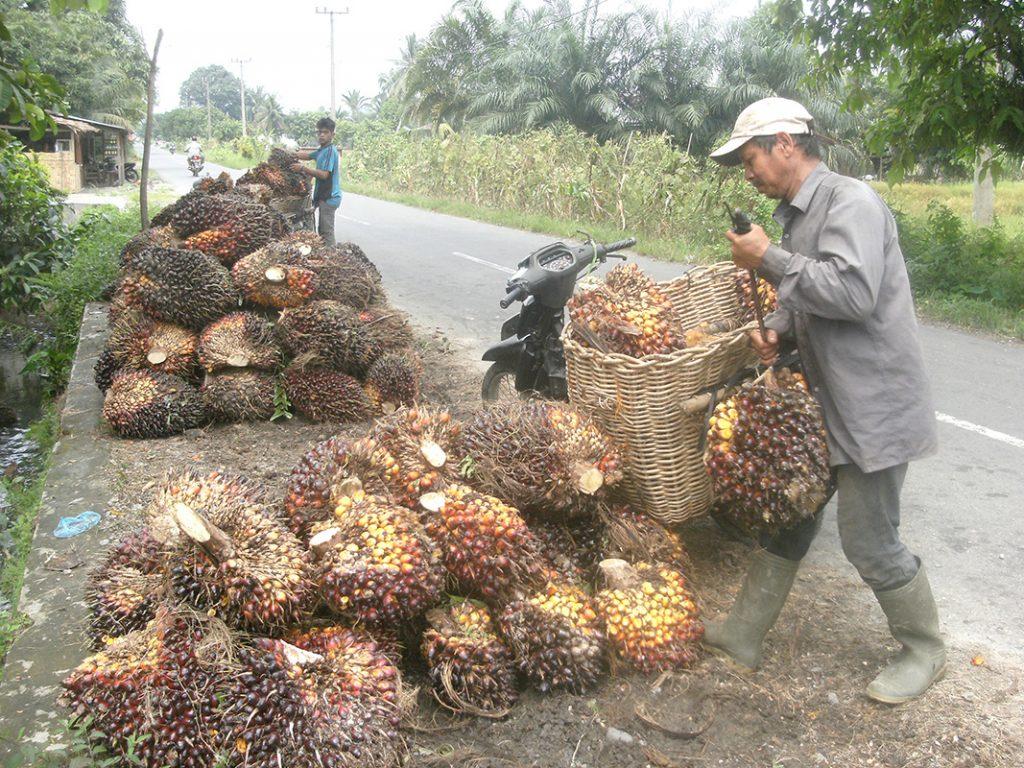Image result for petani sawit