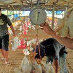 Harga Cabai Turun, Ayam Potong Naik