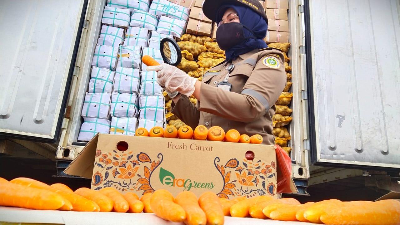 Tak Hanya Penuhi Permintaan Pasar Domestik, Wortel Sumut Diterima di Pasar Dunia