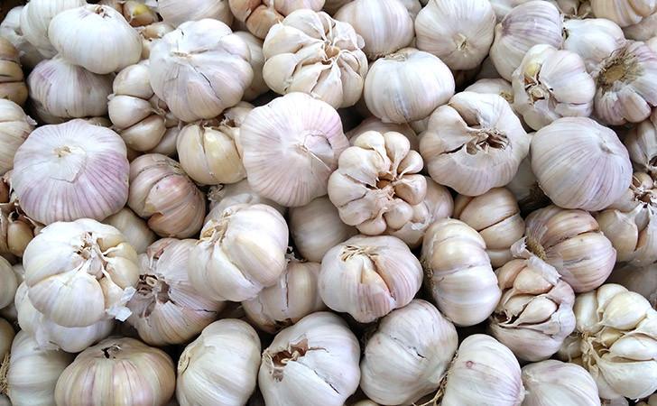 Miliki Potensi Besar, Sumut Produksi Bawang Putih 988 Ton